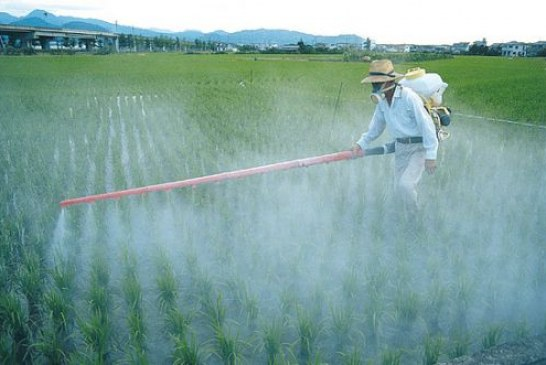 Monsanto's Roundup threatens stability of global food supply
