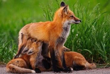 WWF aponta queda de 58% da população mundial de vertebrados entre 1970 e 2012
